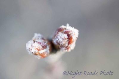 2016_winter 016