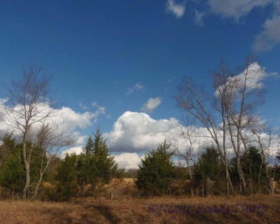 MO_13_landscape 011