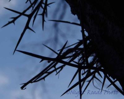 MO_13_tree 025