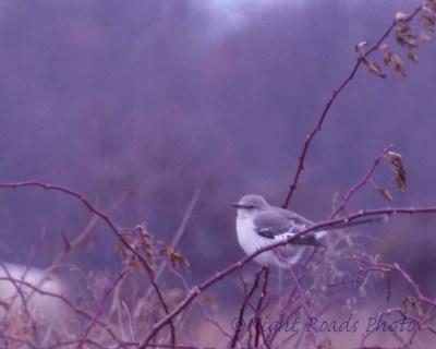 2013_bird 023