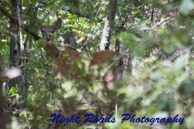 MO_14_wildlife 009