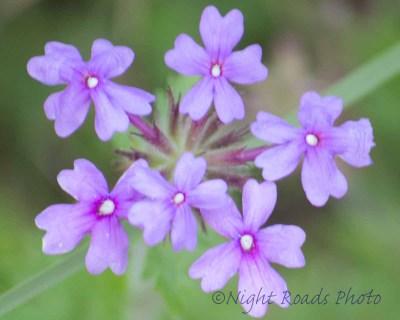 2014_flower 059