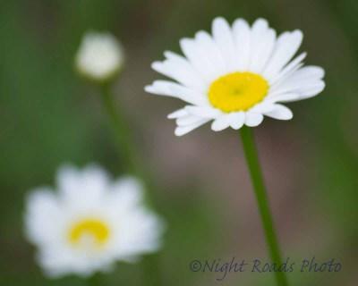 2014_flower 065