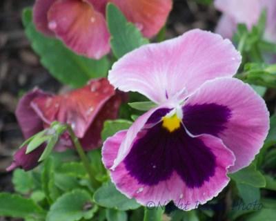2014_flower 082