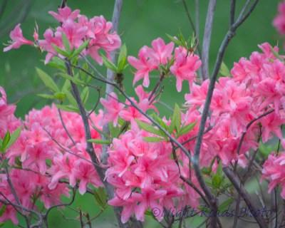 2014_flower 091