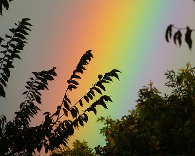 MO_13_Rainbow 06