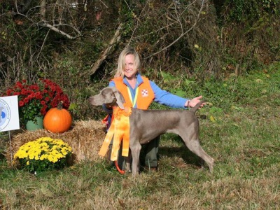 Hunt test pointing breeds weimaraners