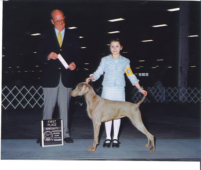 AKC Show weimaraneres champion puppies wca