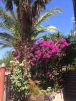 Bašta sa bogumilom, palmama, limunom, mandarinama i  cvećem