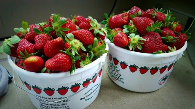 Strawberry Pick'n