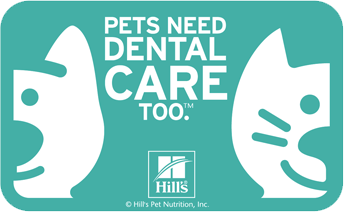 Is Professional Dental Care Really Necessary?