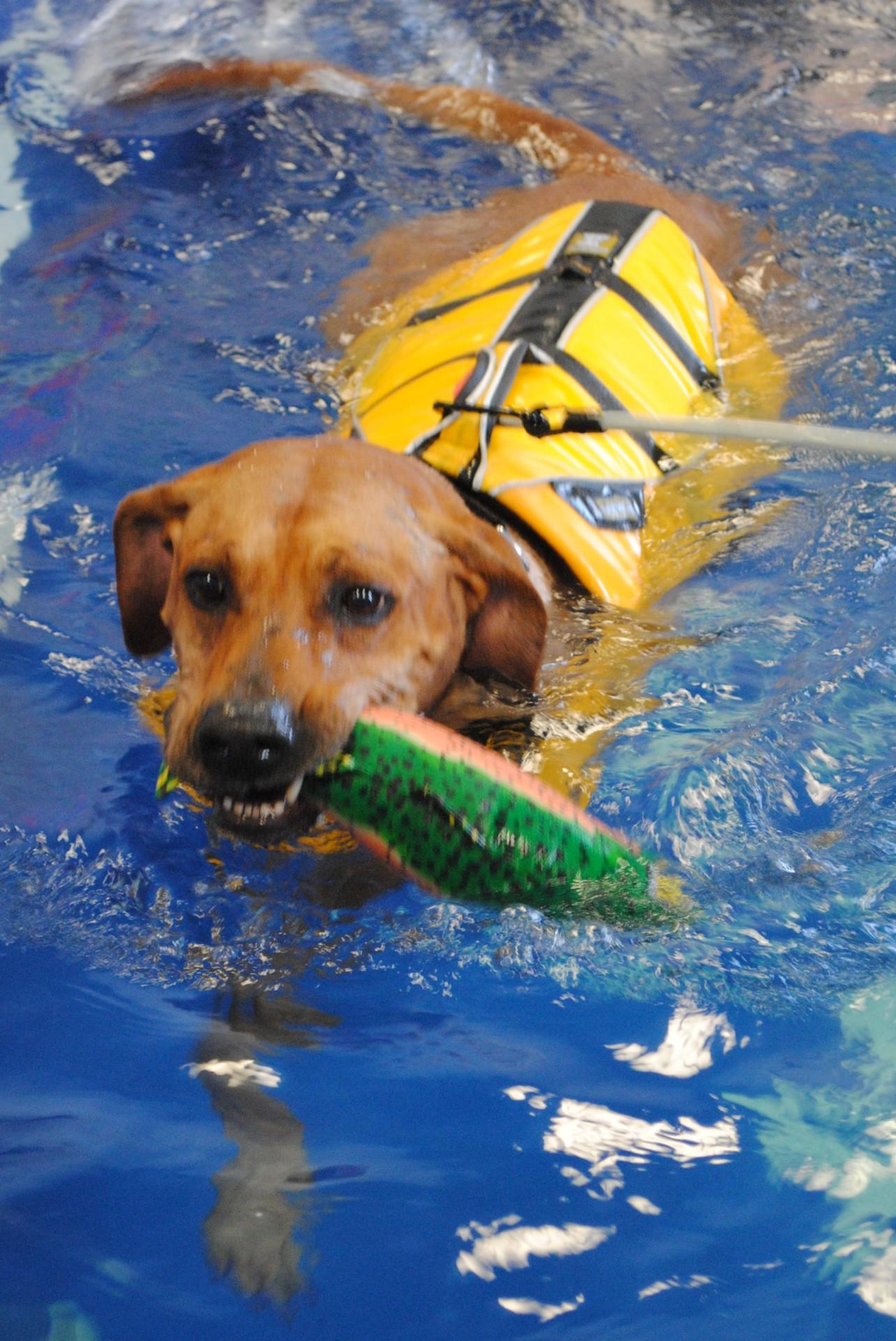 Riverside Rehab Canine Swimming