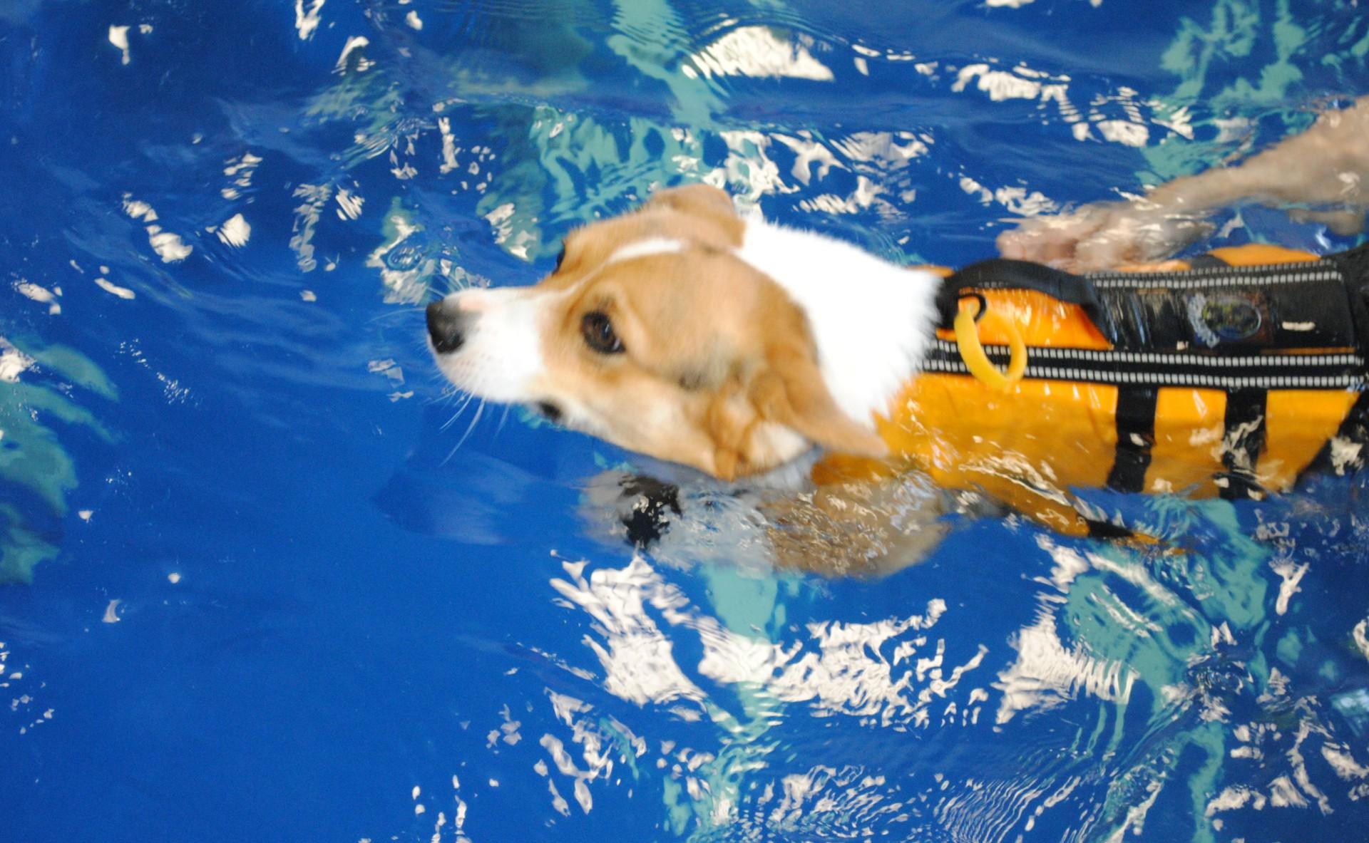 Canine Aqua Therapy