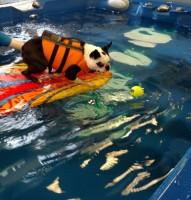 Riverside Rehab Recreational Swim