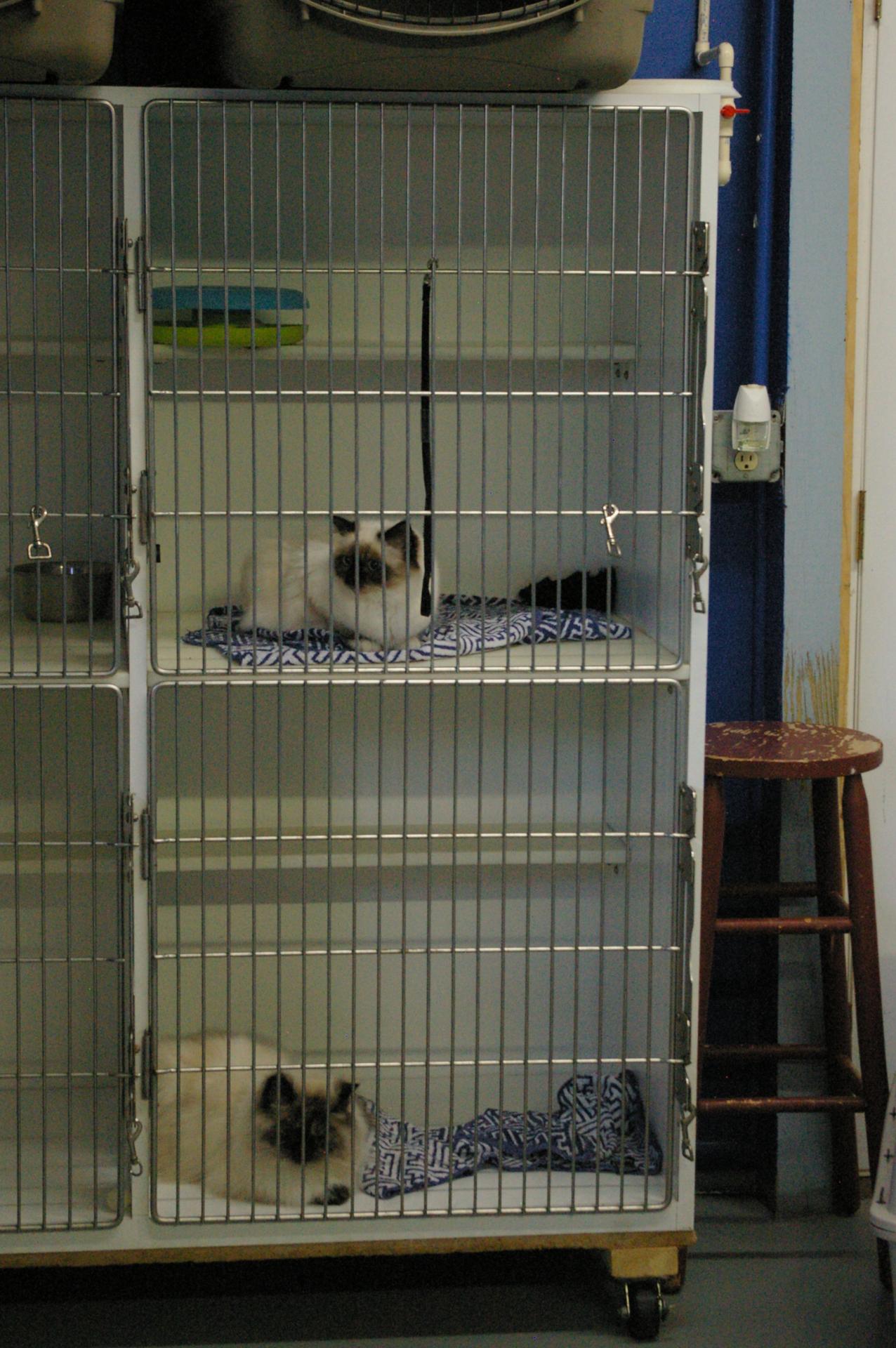 Cat Riverside Veterinary Hospital Kitty Condo