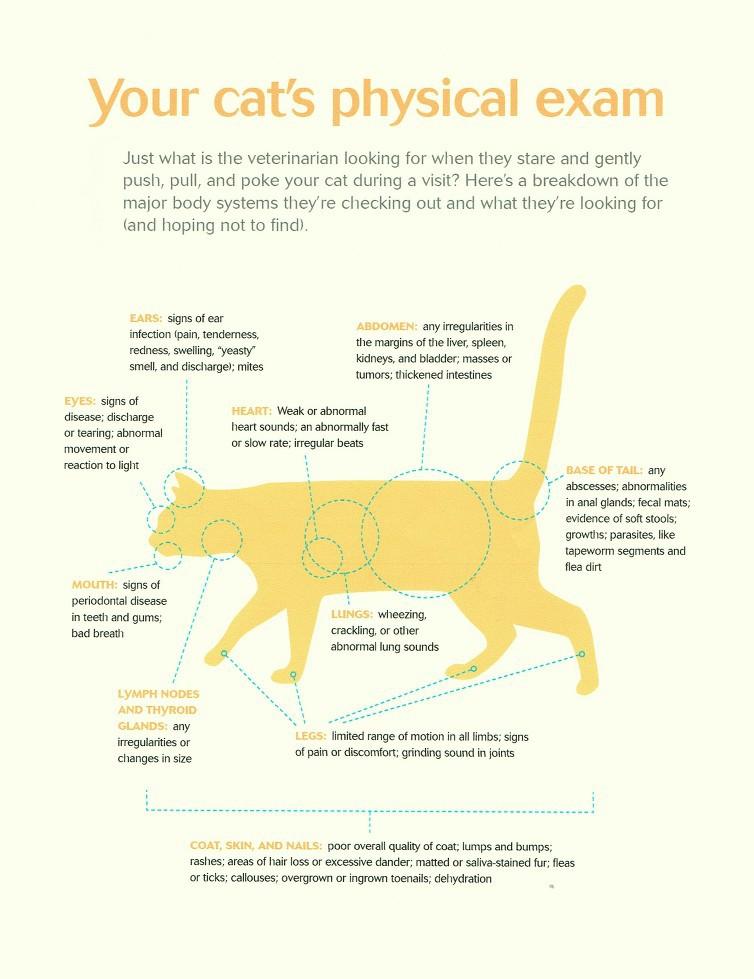 Cat's Physical Exam