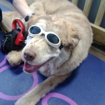 Dog Riverside Veterinary Hospital swimming rehab