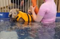 Riverside Rehab Paralyzed Swimmer