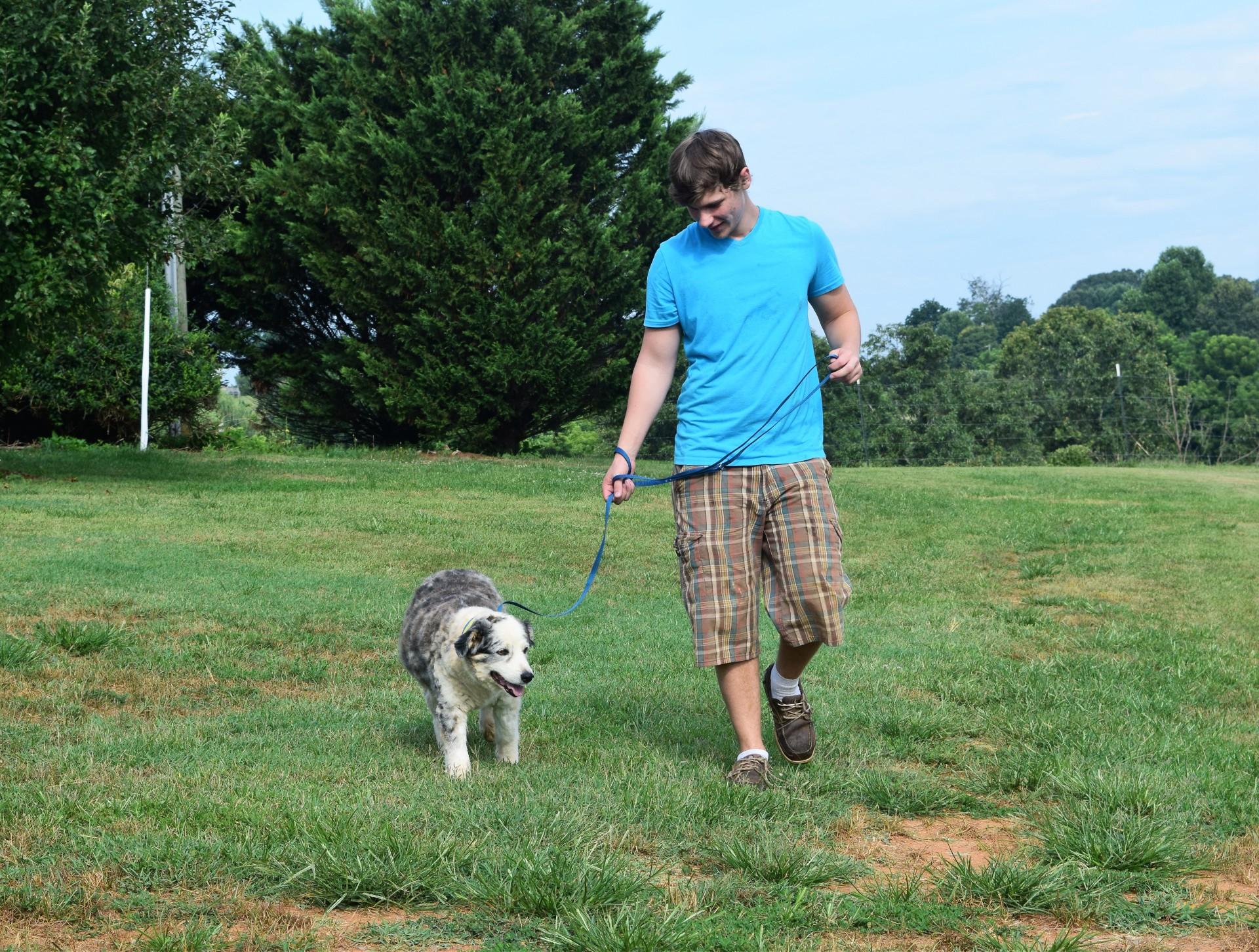 Dog Boarder Walks