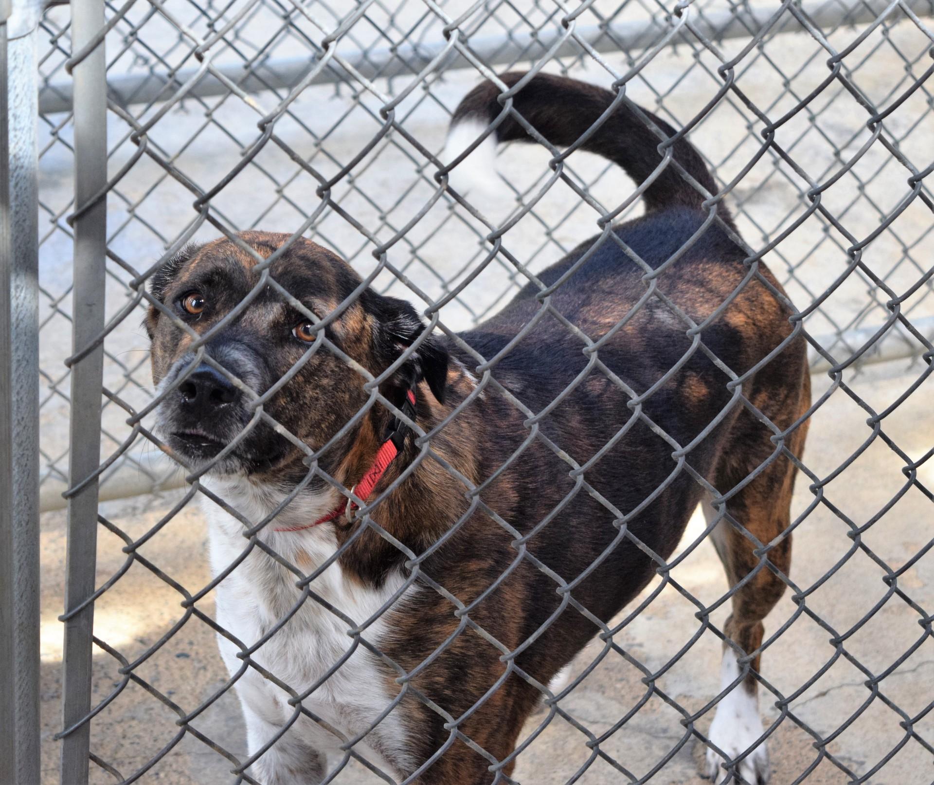 Dog Riverside Veterinary Hospital Boarding Run