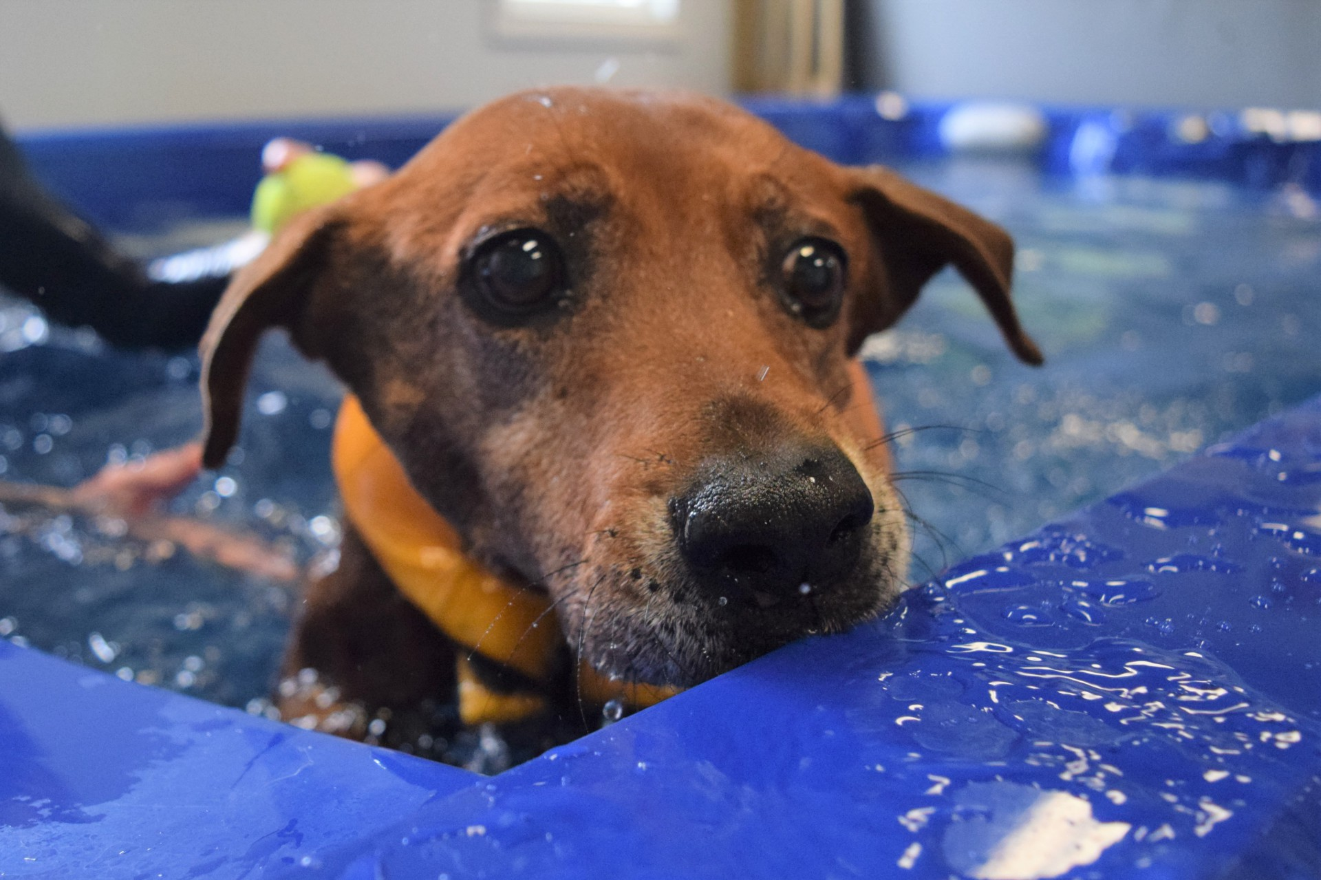 Riverside Rehab Dog Rehabilitation
