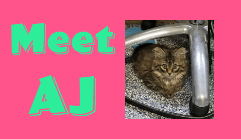 Riverside Veterinary Hospital AJ kitten tripawd