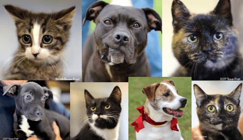 Riverside Veterinary Hospital Donation