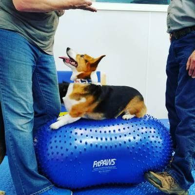 Sage Canine Fitness Riverside Veterinary Hospital