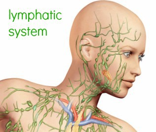 mld, manual lymphatic drainage, lymph drainage, renton medical massage, renton, massage, renton mld