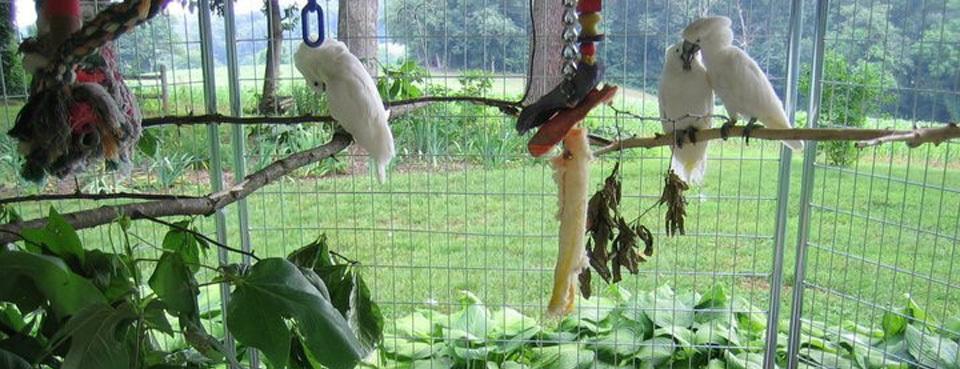 Ruffled Feathers Sanctuary aviary