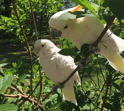 Ruffled Feathers Sanctuary resident