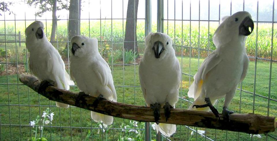 Ruffled Feathers Parrot Exotic Bird Sanctuary and rescue ... Ruffled Feathers Sanctuary