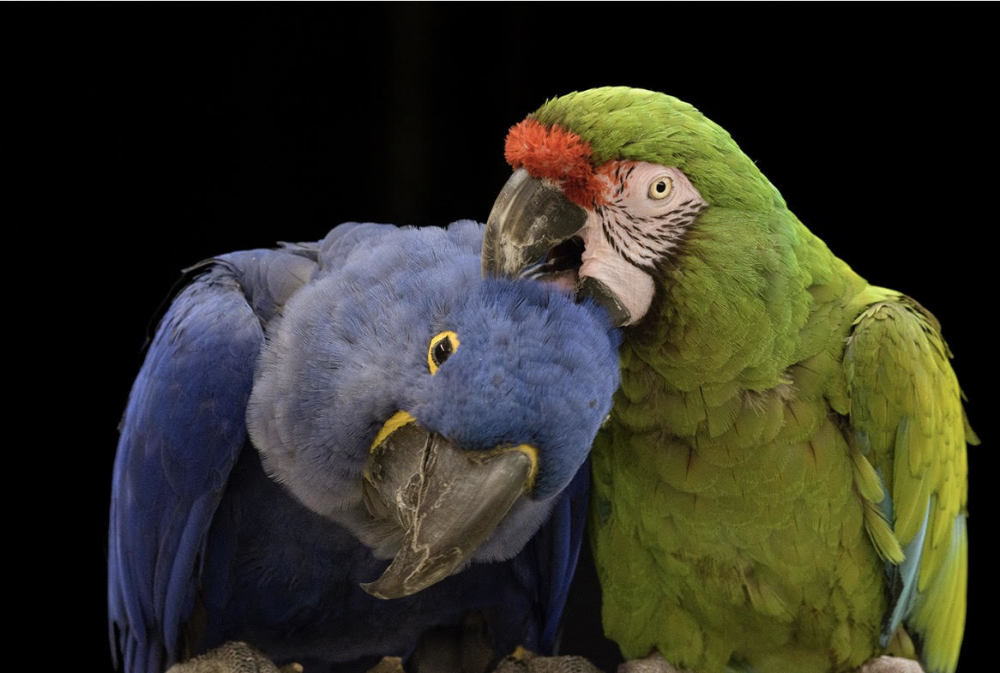 Ruffled Feathers Sanctuary residents