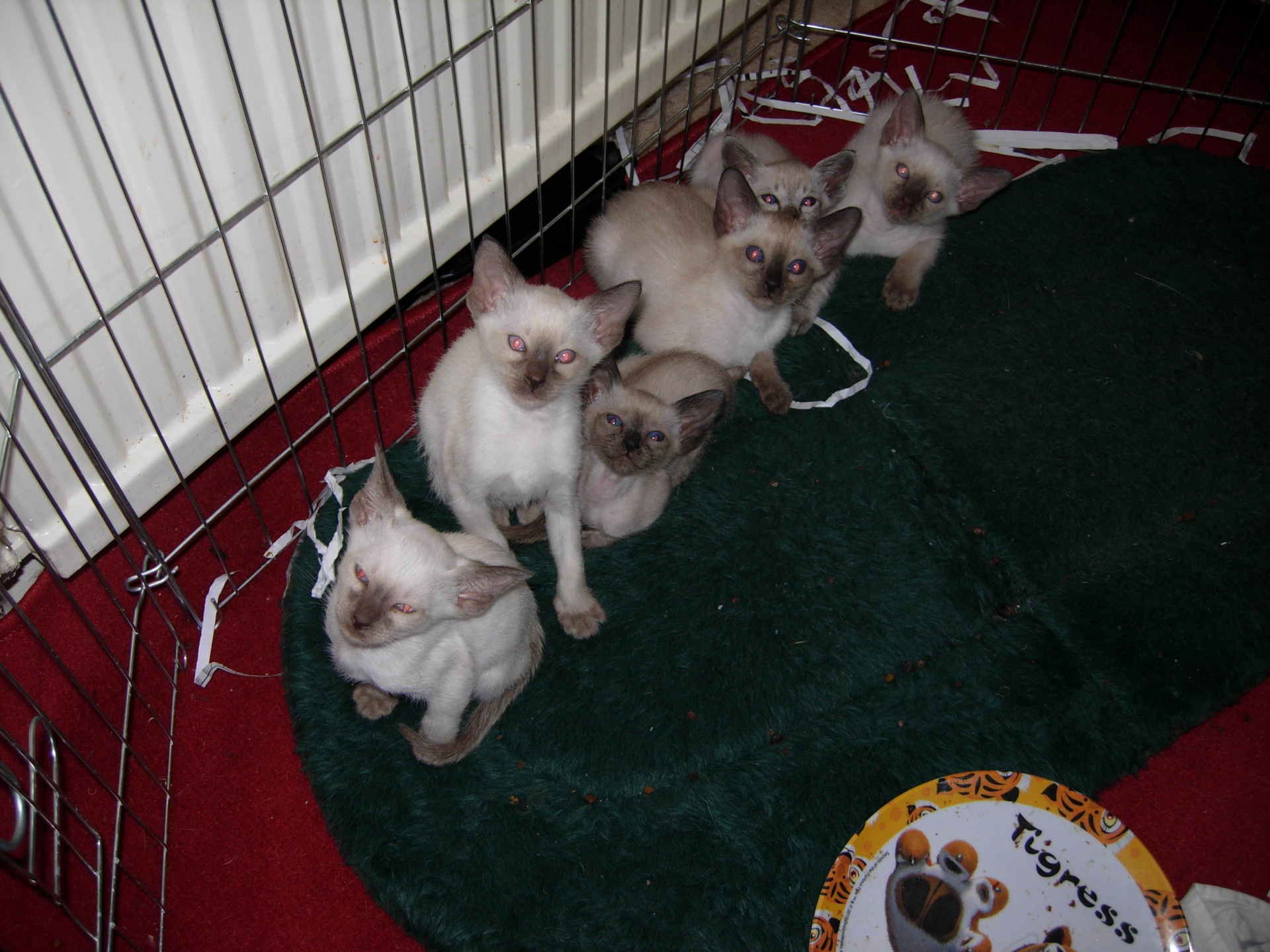 Six in this litter !