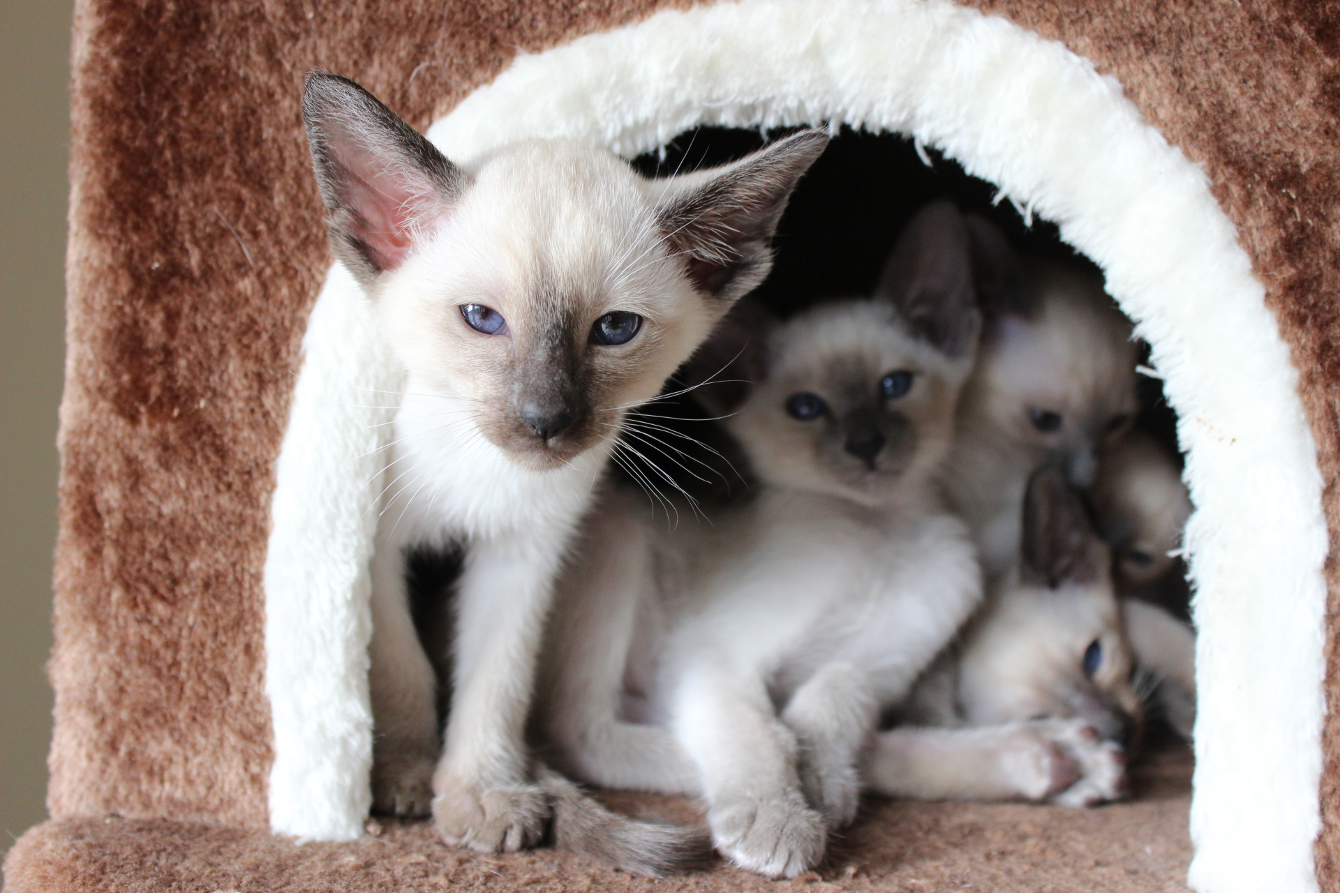 how many kittens in there