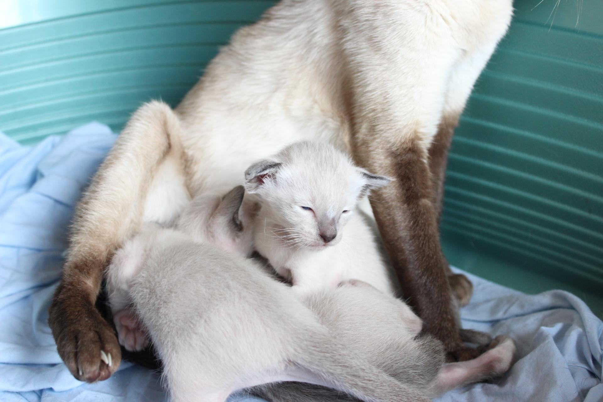 Kitten 3 weeks