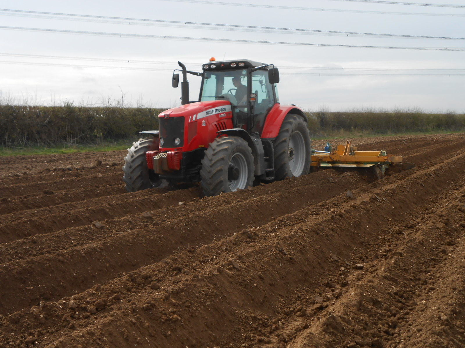 Bed Tilling Potatoes