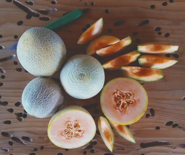 halona melon