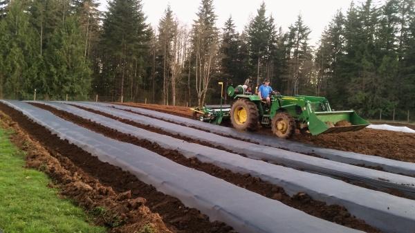 installing mulch rows