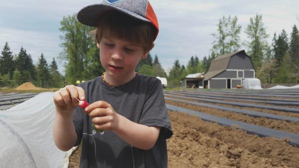 mini radish farmer