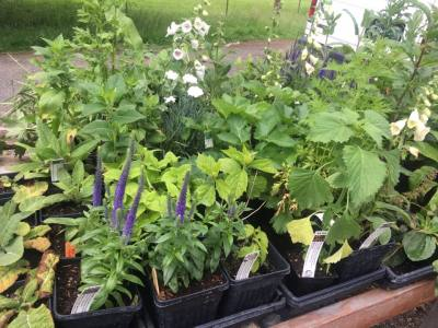 Plant Starts - Local