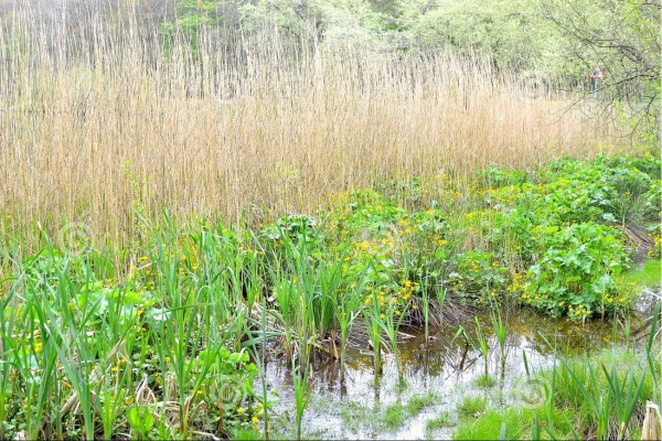 The Growing Trouble with Stormwater Ponds