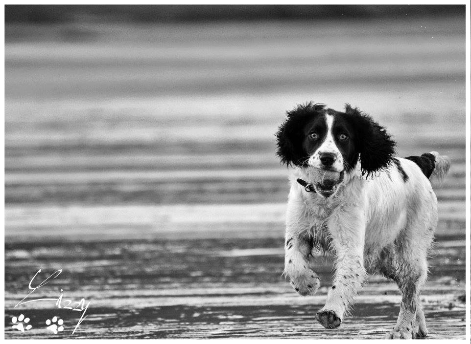 Dog photography scarborough