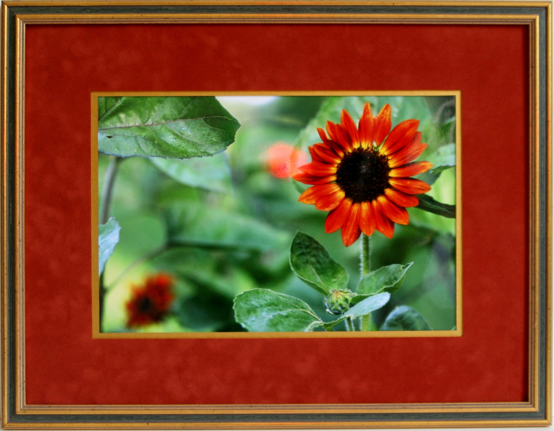 Custom picture frame around flower picture