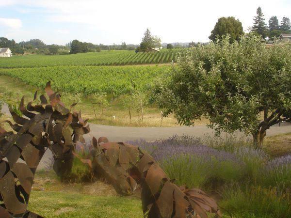 Biodiversity:  lavender, apples, olives and more....