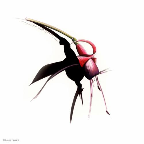 Sketch #38, Fuchsia
