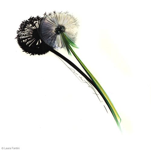 Sketch #54, dandelion