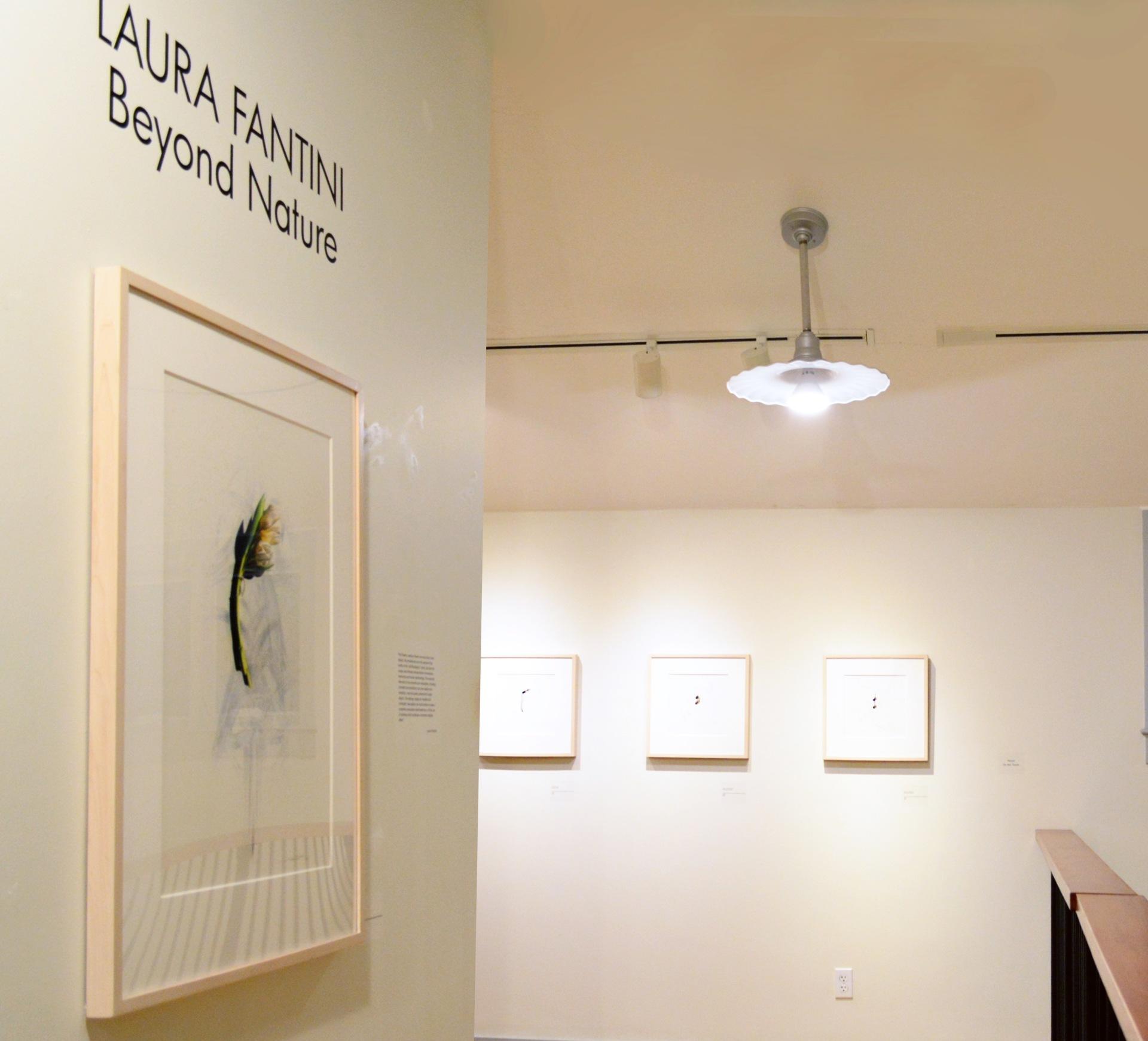 Laura Fantini: Beyond Nature