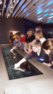 Field Trip to the National Aquarium