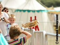 Sky Birds of Prey, Medieval Fayre, Sandwich Showground, East Kent Events